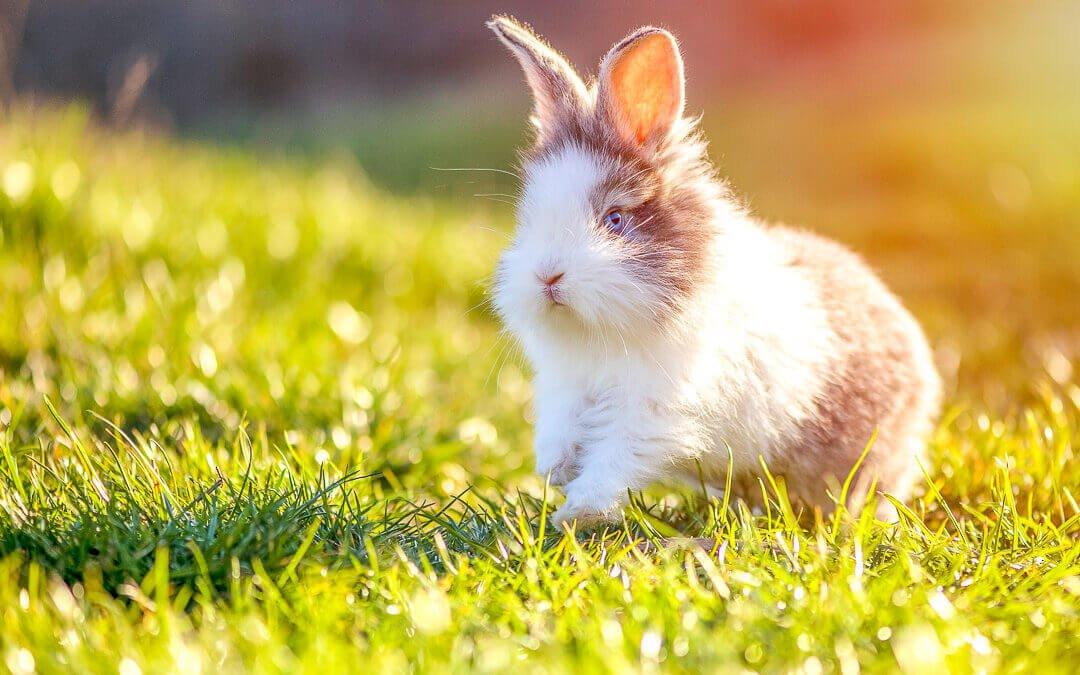 Glückliches springendes Kaninchen